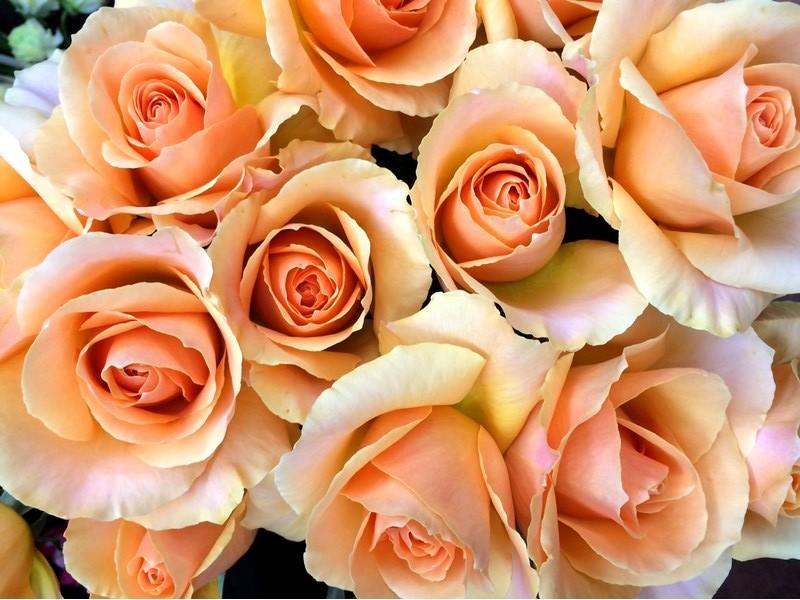 花のある暮らし Vol.5