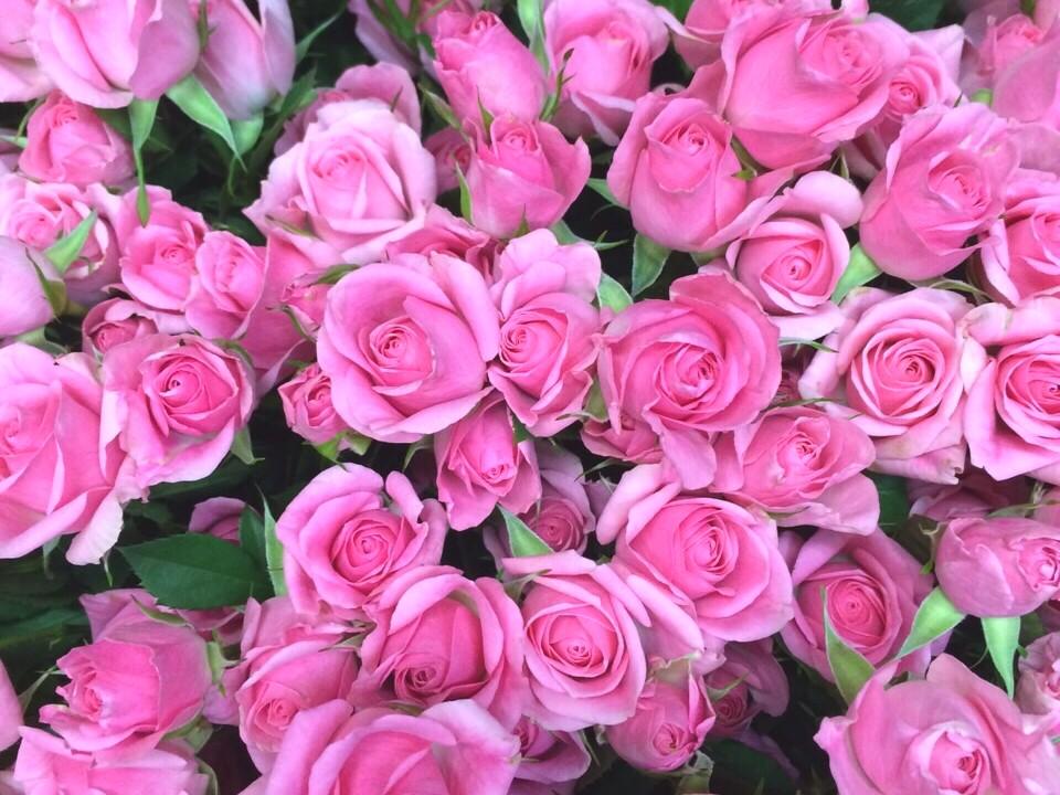 花のある暮らし Vol.6