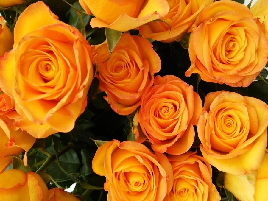 花のある暮らし Vol.8