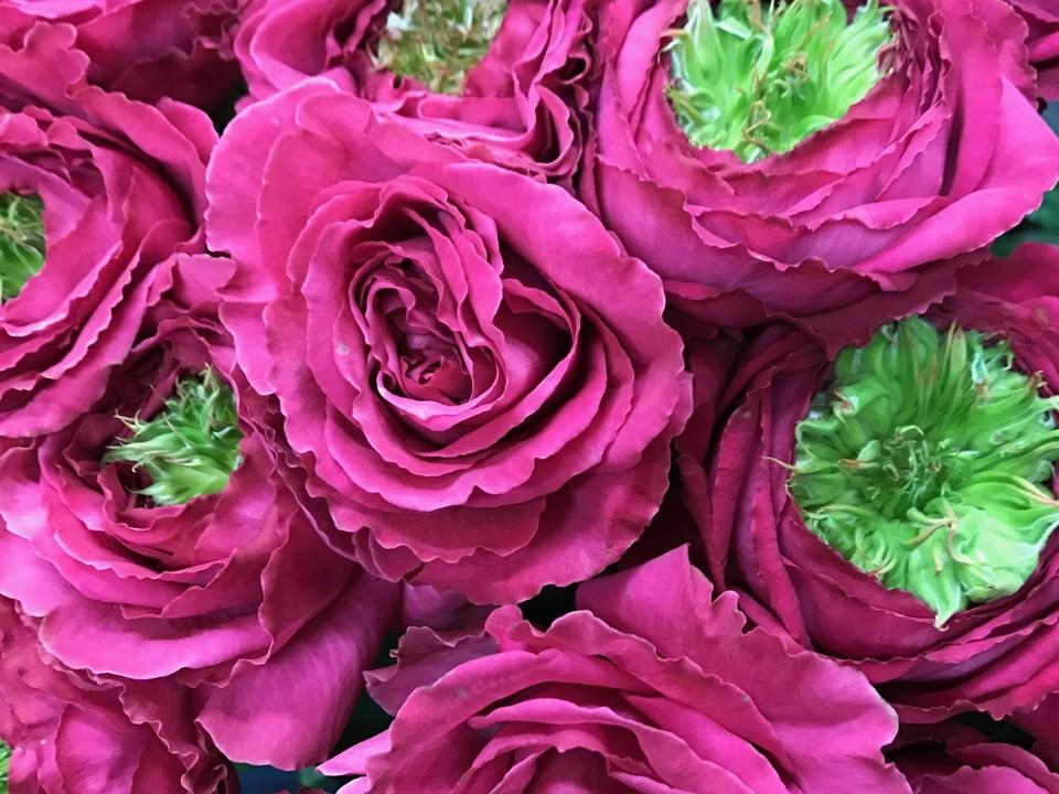 花のある暮らし Vol.11